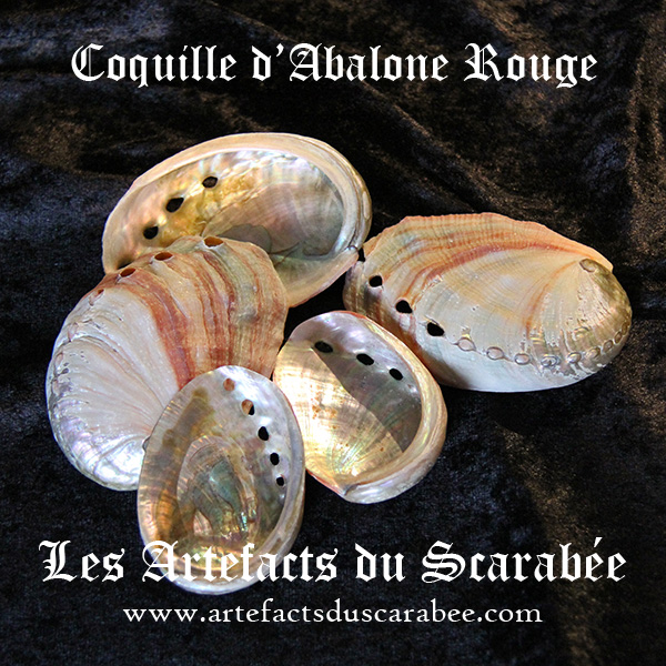C- Petite Coquille d'Ormeau (Abalone Rouge) Fumigation-Offrande