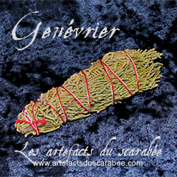B- Genévrier (Attraction Énergie +) Bouquet de 3cm x 10cm